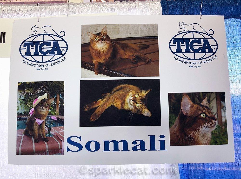 closer look at somali cat poster