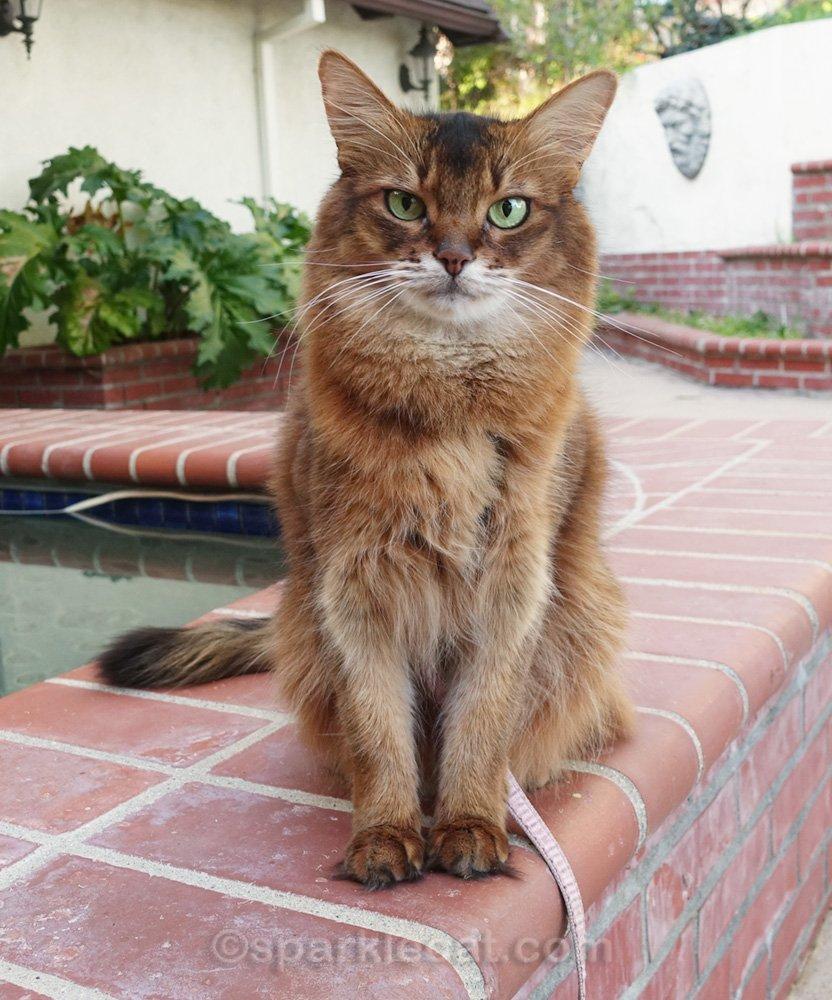 Summer is upset by the condition her catnip garden is in!