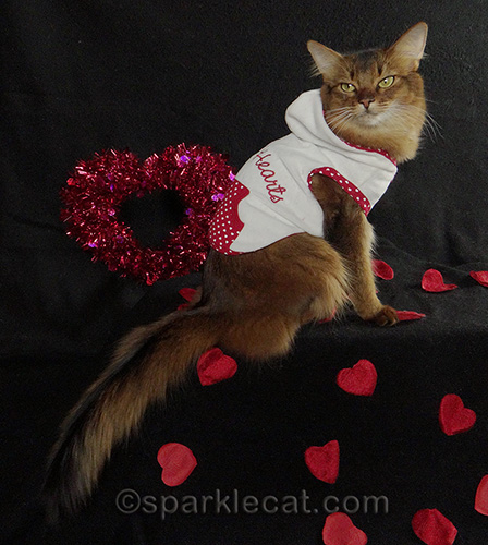 side view of Somali cat in Queen of Hearts hoodie