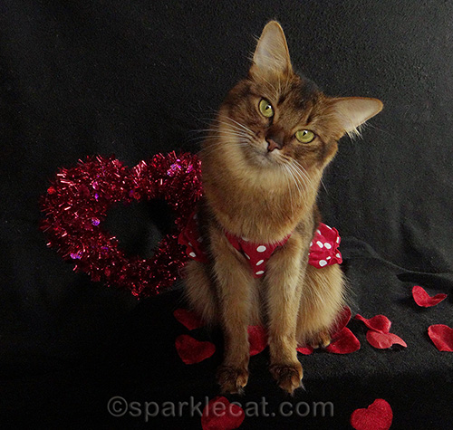 somali cat posing in a red polka dot dress for valentine's day