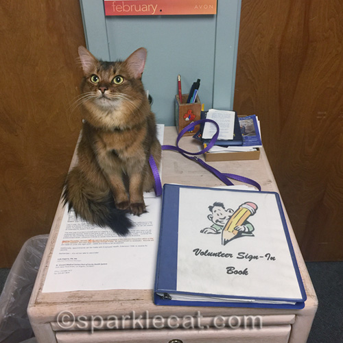 therapy cat sitting by hospital volunteer sign-in book, waiting for a miracle
