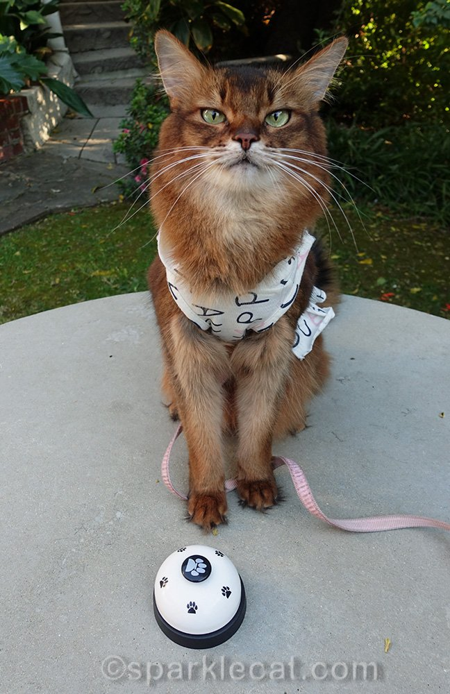 somali cat with hoodie dress, with hood off
