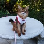 Summer wears her Queen of Hearts cat hoodie on her most recent outing.