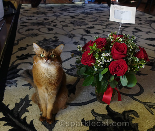 somali cat with rose bouquet for Valentine's Day