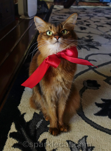 somali cat wearing red bow tie from flower bouquet