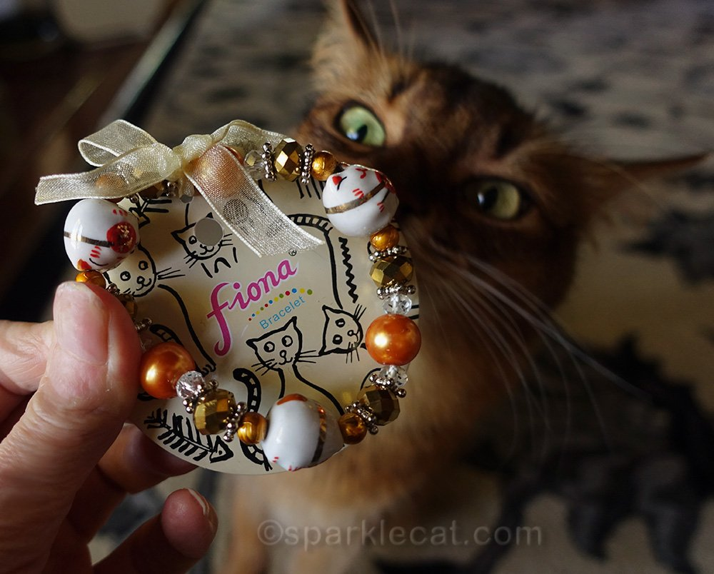somali cat looking at dainty lucky cat bracelet
