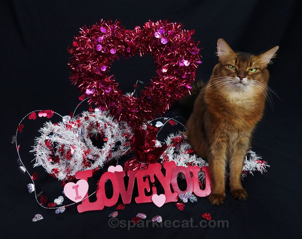 somali cat in too-busy Valentine Day set