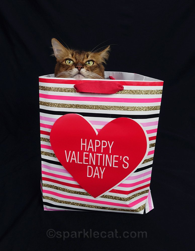 somali cat peeking out of bag