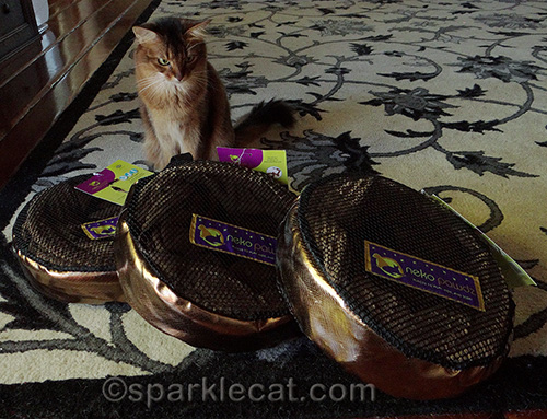 Neko Pawdz tunnels in packages, with Somali cat looking at them