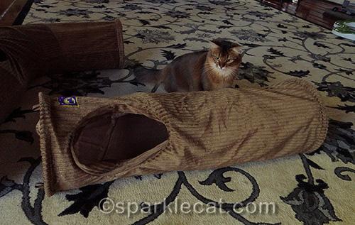 Neko Pawdz I tunnel with somali cat