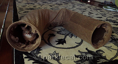 somali cat with Neko Pawdz U Tunnel