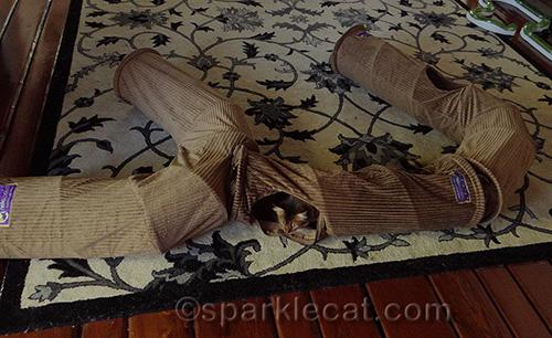 somali cat playing with Neko Pawdz tunnels
