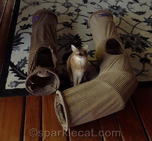 somali cat with Neko Pawdz I and J tunnels