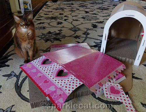 somali cat with scratcher house in pieces