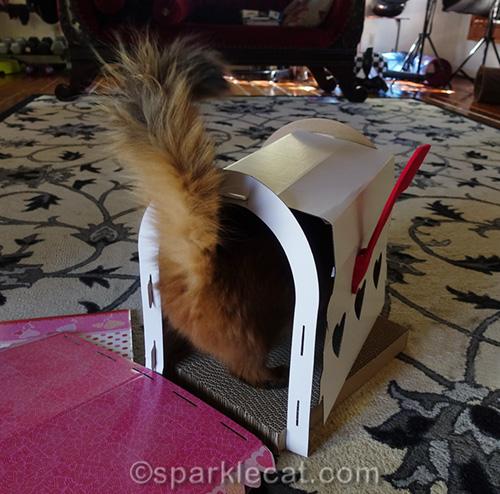 somali cat inspecting mailbox scratcher