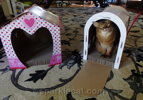 somali cat happy with fixed scratcher houses