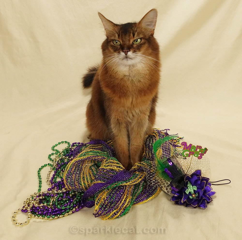 Summer and her human have a messy Mardi Gras photo session.