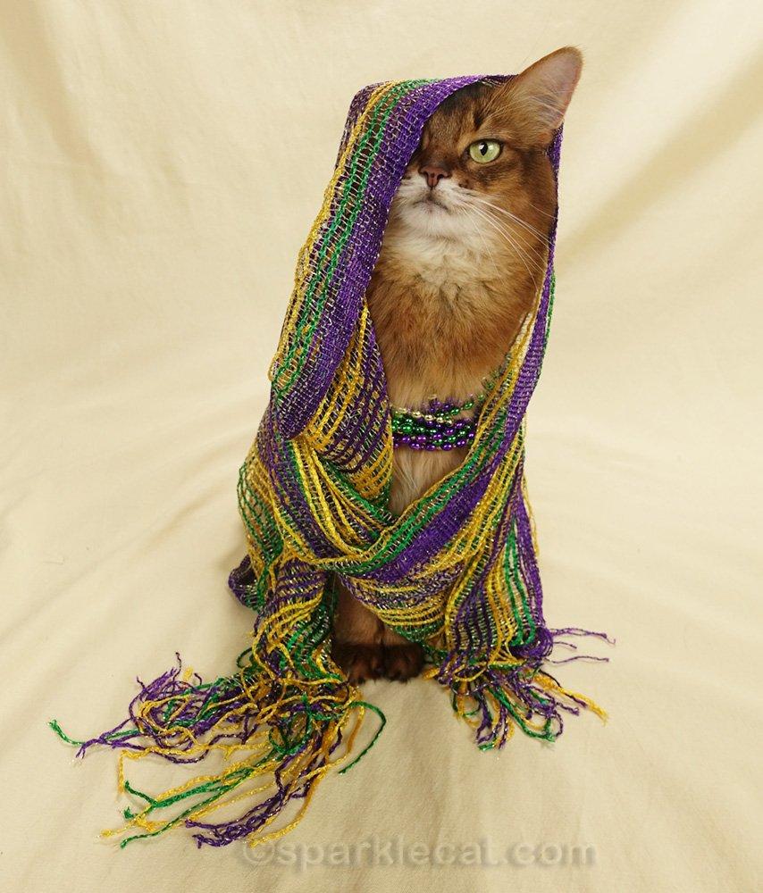 Somali cat wrapped in Mardi Gras scarf
