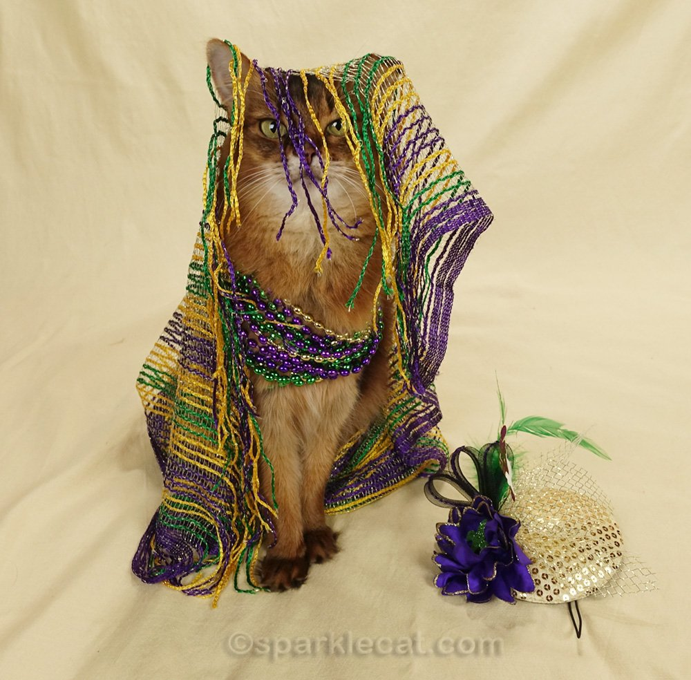 somali cat with scarf fringe hanging in her face