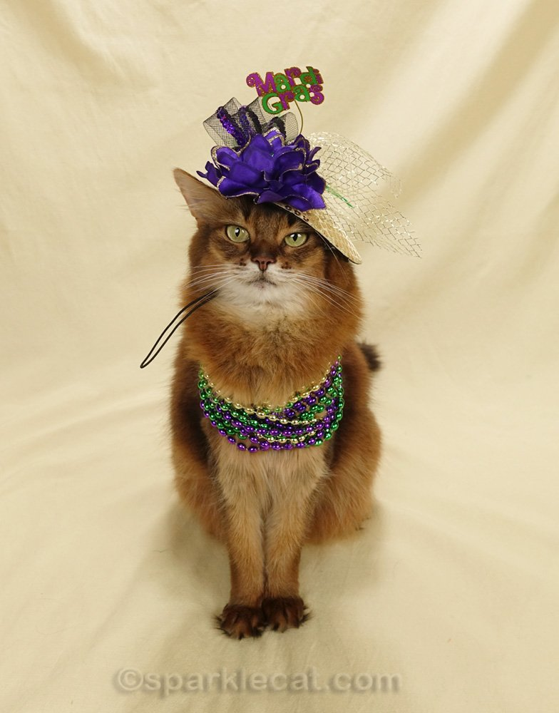Somali cat in Mardi Gras hat and beads