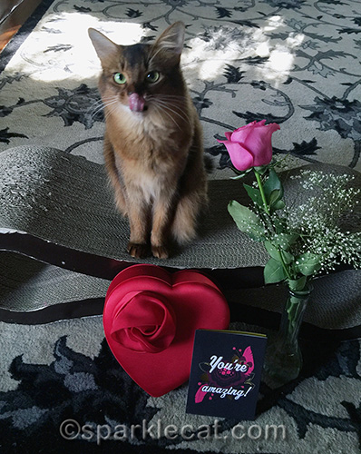 somali cat tongue with rose, card and box of chocolates