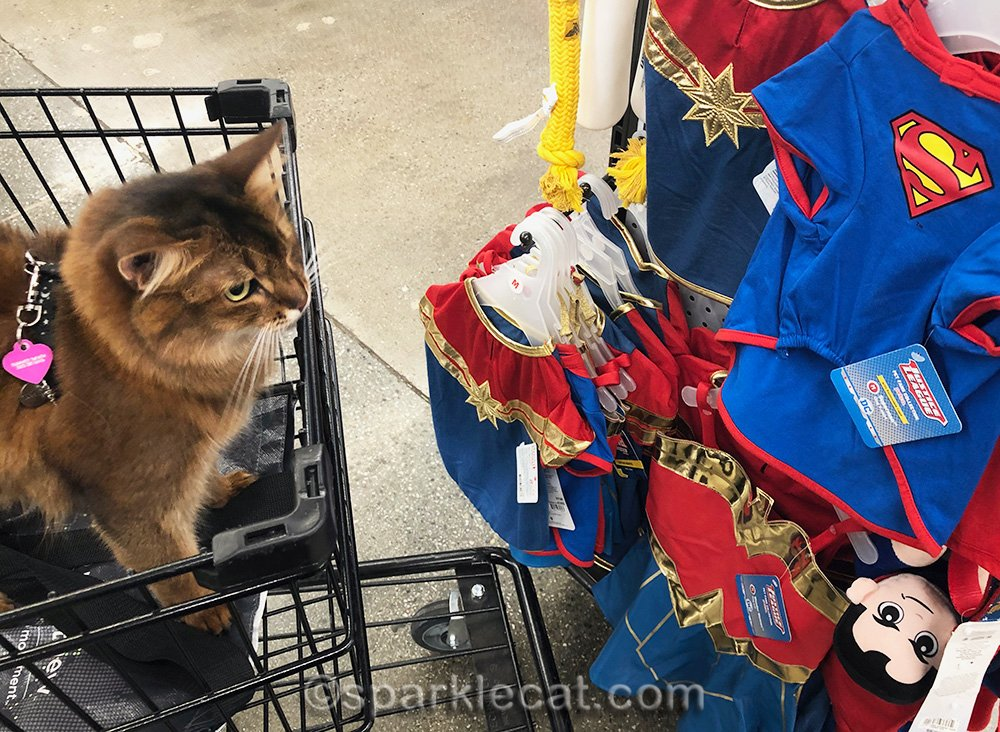 somali cat doesn't like superhero costumes