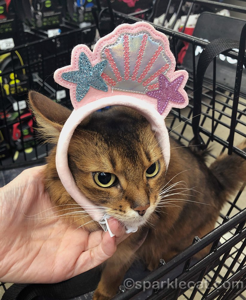 somali cat annoyed by mermaid headband