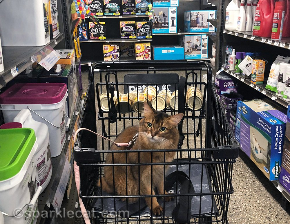 somali cat in cat little aisle