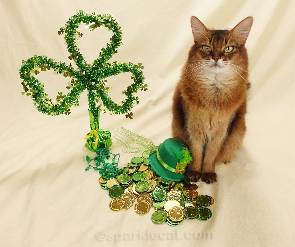 Summer does a St. Patrick's Day photo session... or is that MC Paddy?