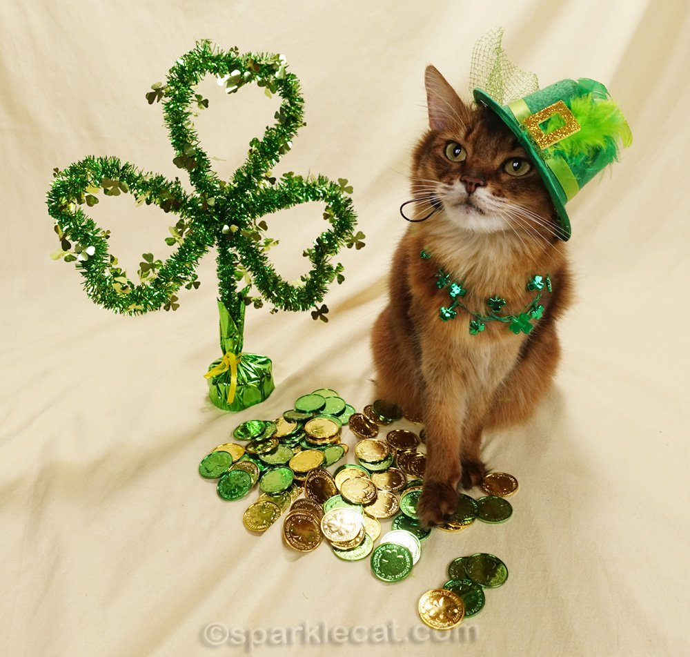 somali cat wearing St. Patrick's Day hat and necklace