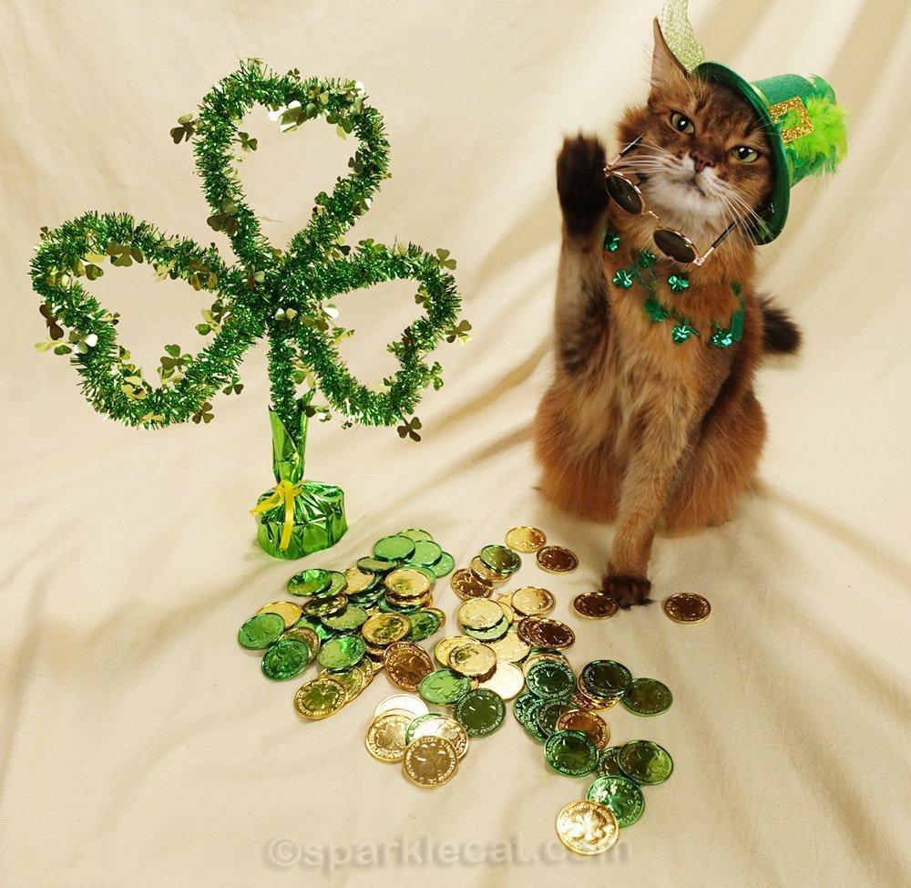 somali cat removes dark glasses on St. Patrick's set