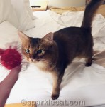 Saturday Catinee: Playing Fetch!