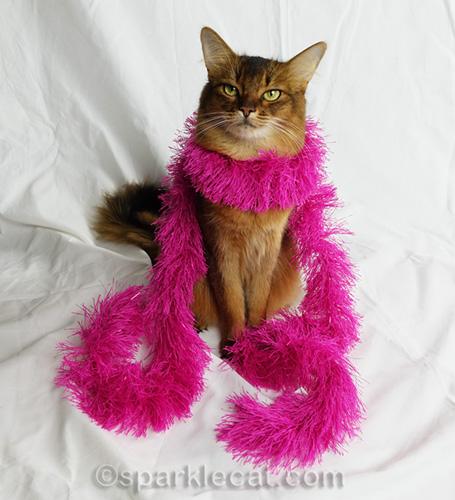 somali cat posing in fashion boa