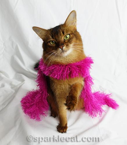 somali cat wearing a pink fashion boa