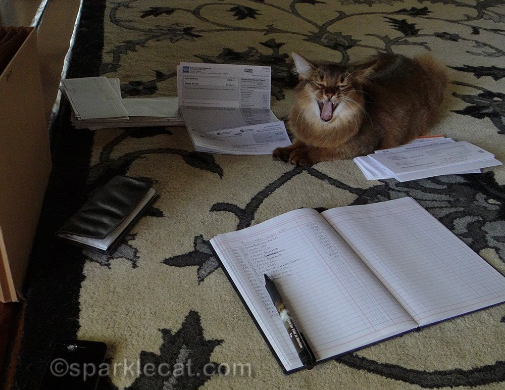 somali kitten's first february helping with tax prep