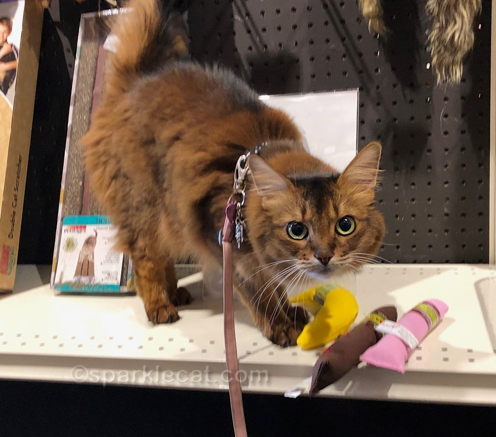 somali cat sniffing catnip toys at pet store
