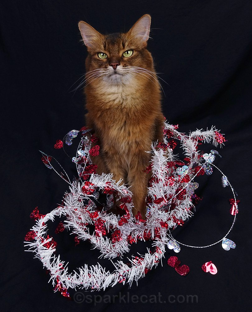 somali cat in a mess of Valentine's Day garlands