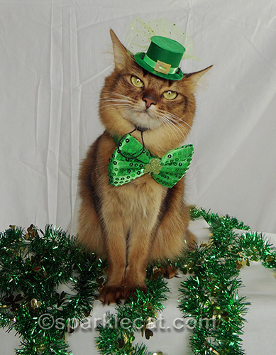 somali cat wearing leprechaun hat and green bow
