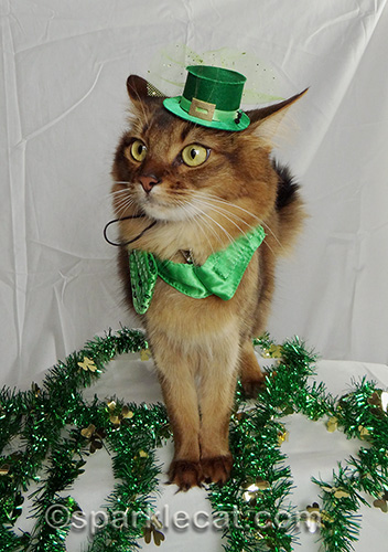 distracted somali cat in leprechaun hat and green bow