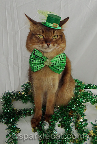 somali cat posing with leprechaun hat and green bow