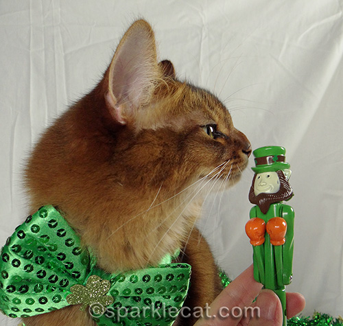 somali cat in green bow with plastic leprechaun pen
