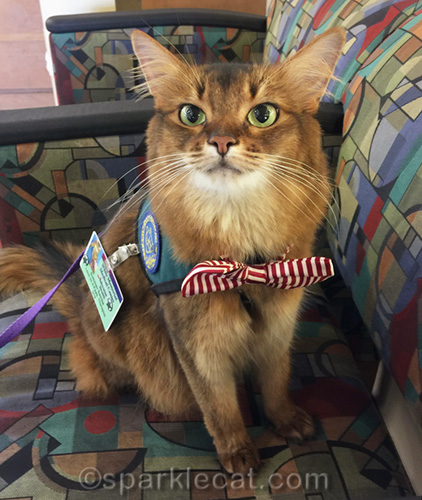 therapy cat back to work