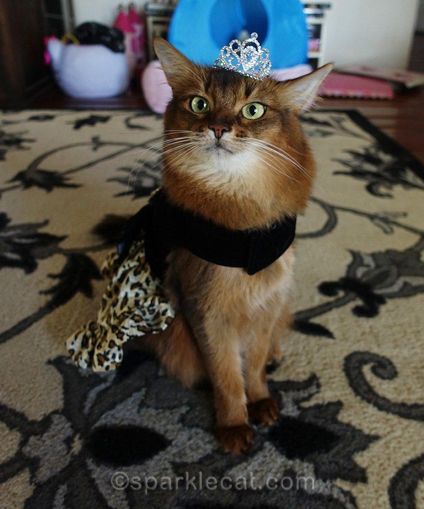somali cat in fancy dress and tiara