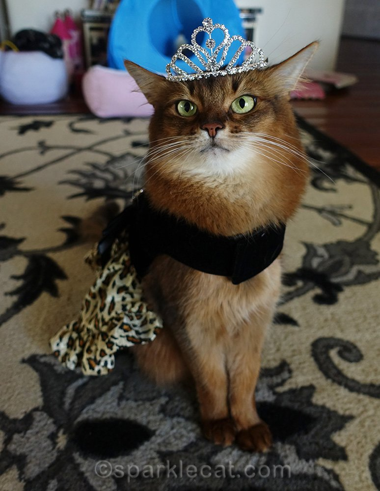 somali cat wearing fancy dress and larger tiara