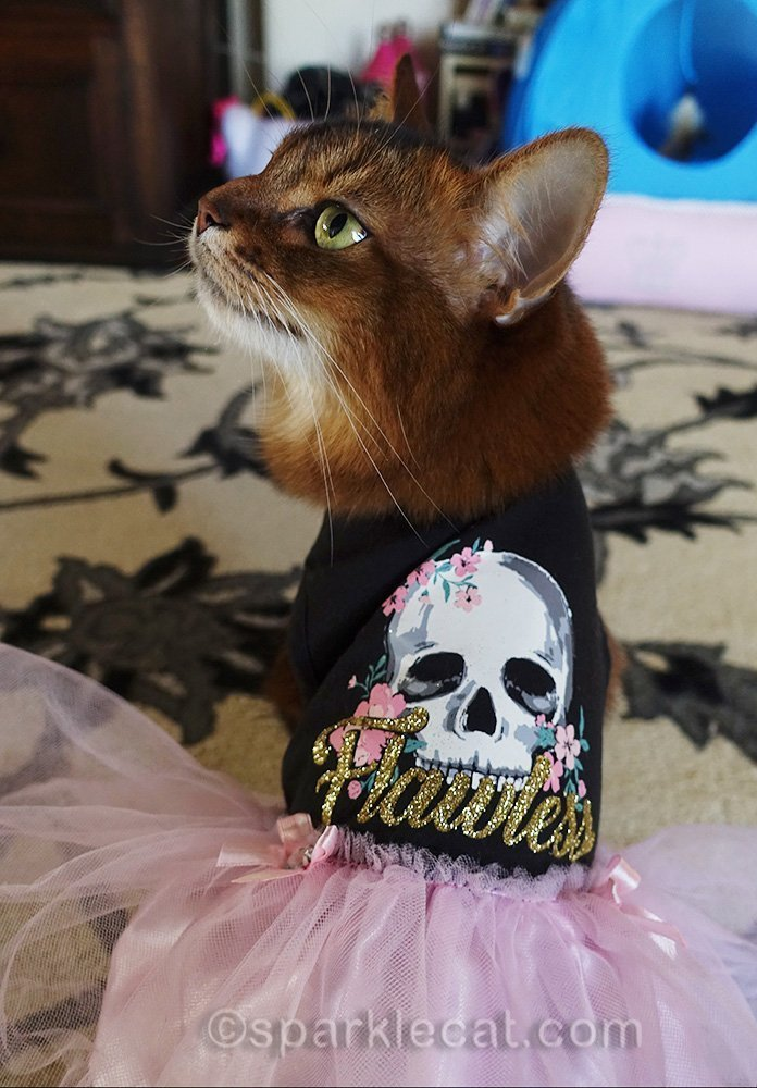 somali cat modeling the back of her Flawless dress