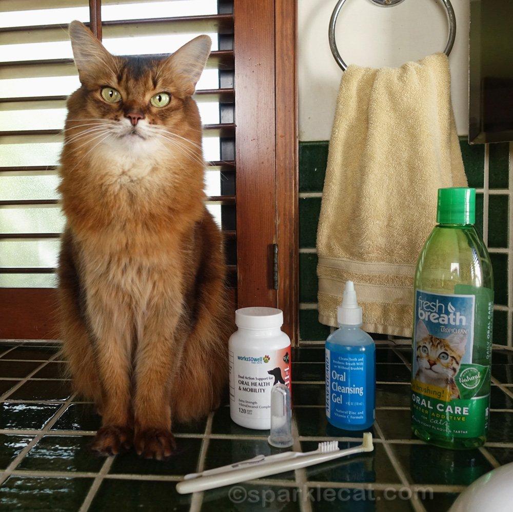Summer shares her most important cat dental health secrets for National Pet Dental Health Month.