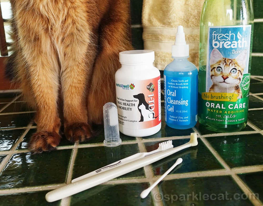 cat toothbrushes and oral cleansers for cats