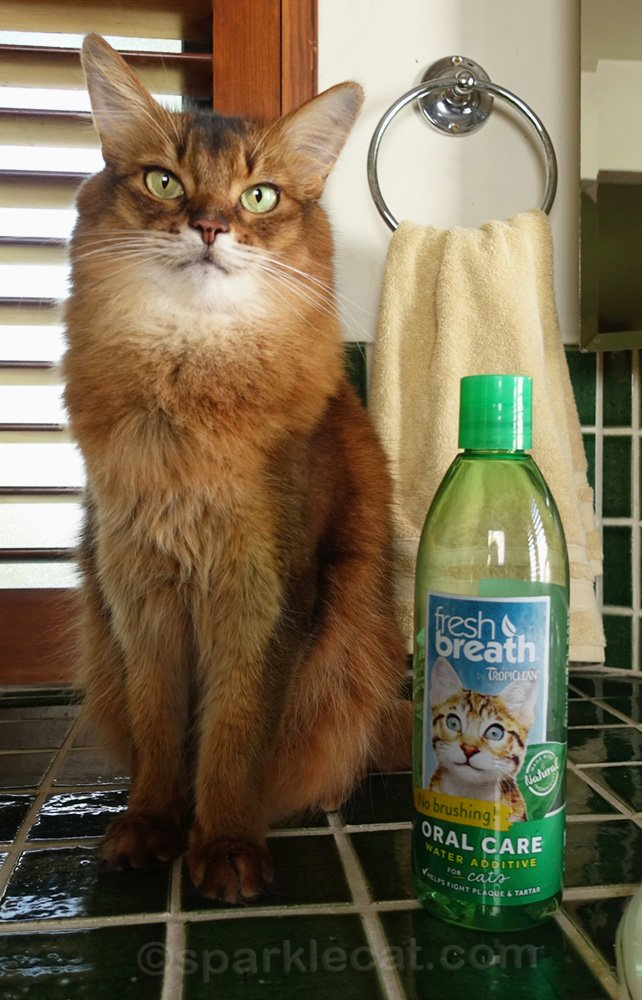 Somali cat posing with Tropiclean Fresh Breath Water Additive