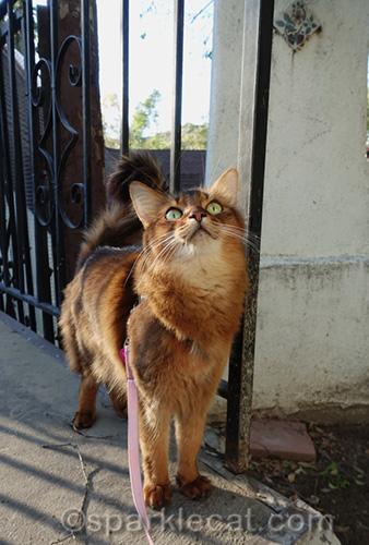 somali cat bird watching