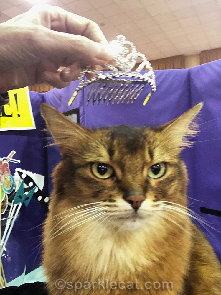 somali cat says crown me